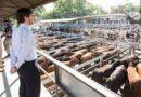 Mercado de Liniers: 2020 con 3% menos de hacienda comercializada y alza de precios de 70%