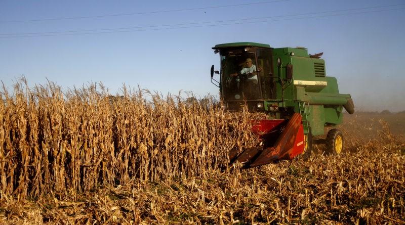 cosecha, trigo,