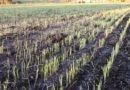 Prevén lluvias persistentes en los campos bonaerenses